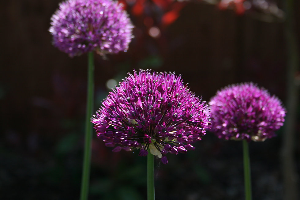 planting design costs tythorne garden design
