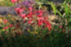 august tythorne garden design.