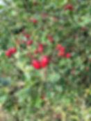 hawthorn tythorne garden design.jpg