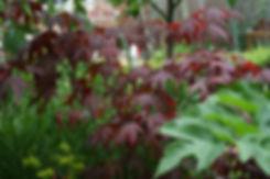 grantham planting designer.jpeg