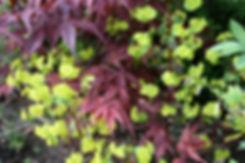 spring colour tyhorne garden design.jpeg