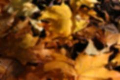October Tythorne Garden Design.jpg