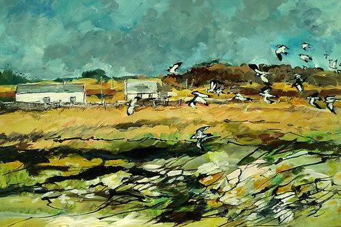 Lapwings Carrick Shore