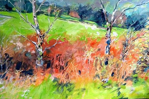Birch and bracken near Gelli