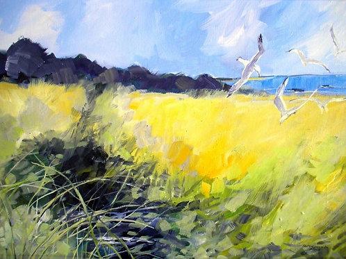 Gulls Carrick