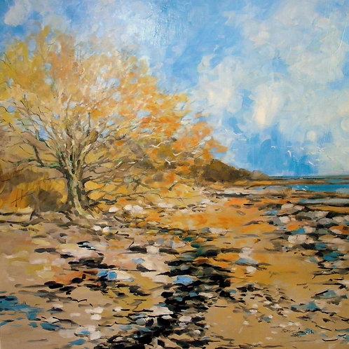 Shore at Carsluith