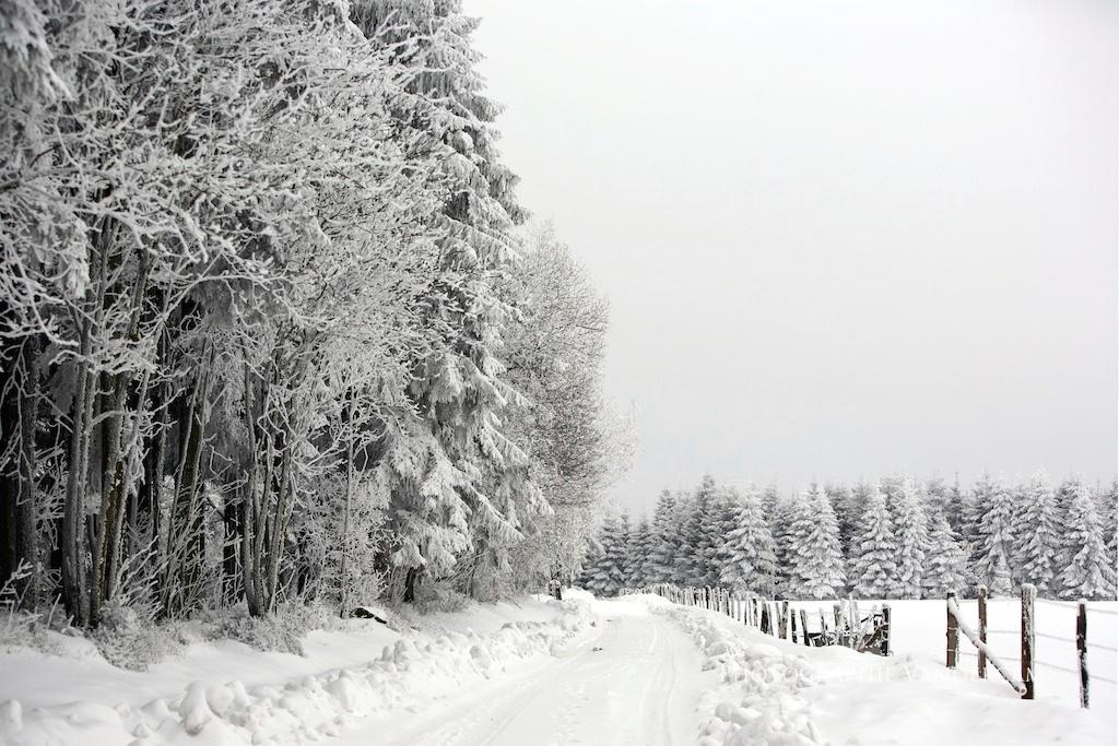 Hautes-Fagnes en hiver