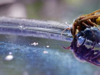Haben Wasserversorger im Mittelland überhaupt noch eine Zukunft?