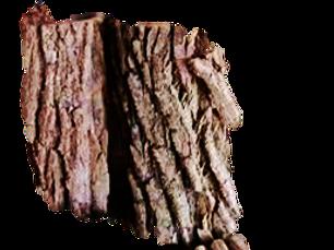 melhor substrato para orquideas , casca de peroba
