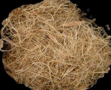 melhor substrato para orquideas, fibra de coco