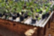 Como fazer um orquidário, portal do orquidófilo, bancadas