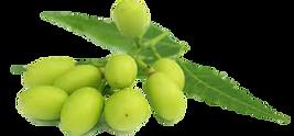 remedios caseiros para orquideas, combate de pragas em orquideas, neem, oleo de neem