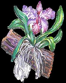orquidea no tronco, desenho de orquidea