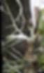 como fazer a orquidea enraizar, raizes de orquideas