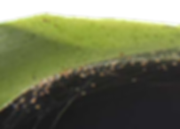 pragas nas orquideas, ácaros
