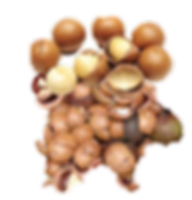 melhor substrato para orquideas, macadamia
