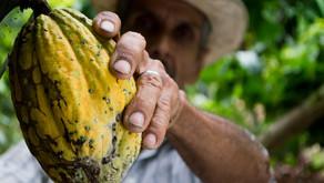 Nicaragua: la Dalia