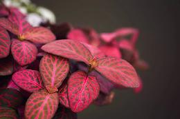 red plant.webp