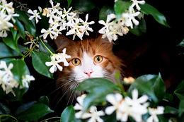 cat in white flowers.jpg