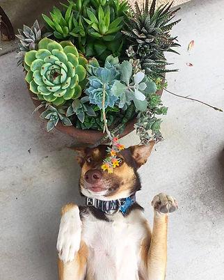 dog with succulant.jpeg