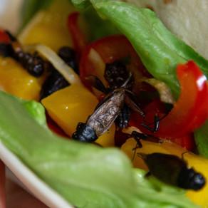 Med insekter på tallerkenen