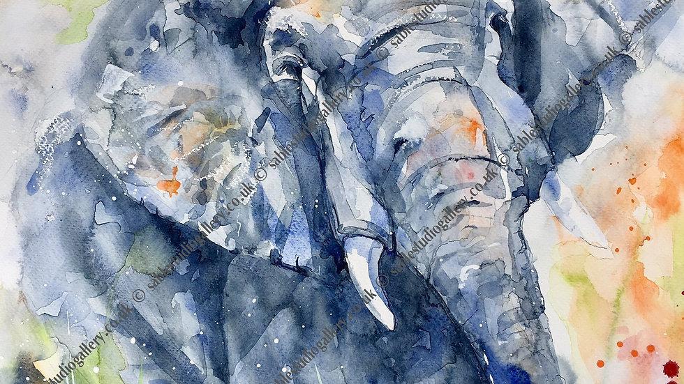 Elephant giclee limited edition print