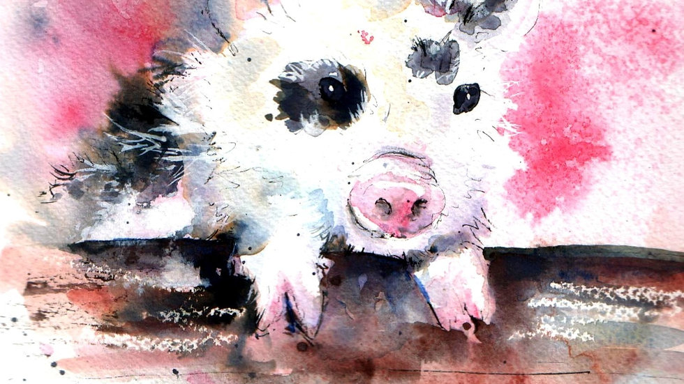 Limited edition giclee print - Inky Pinky Pig