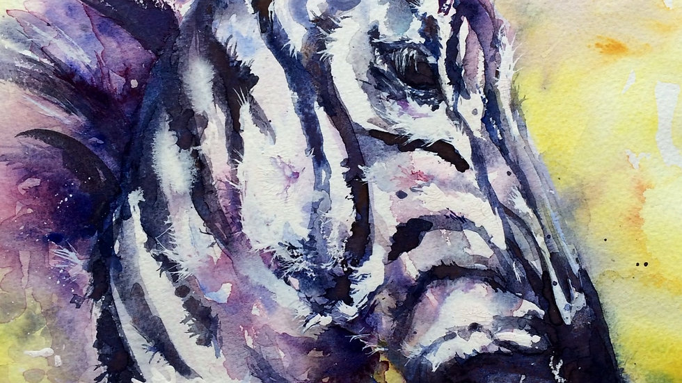 Limited edition giclee print - Zebedy