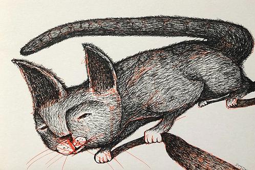 Hunter Cat