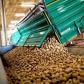Kartoffellagerhaus Falkenhain GmbH