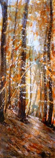 Forêt orange