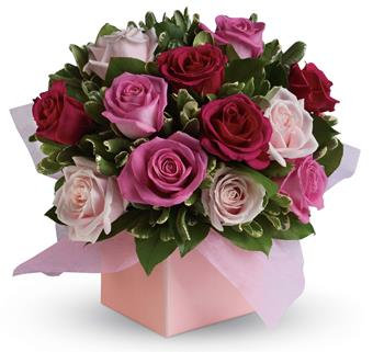 Blushing Roses