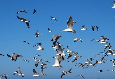 Seagulls, Greece
