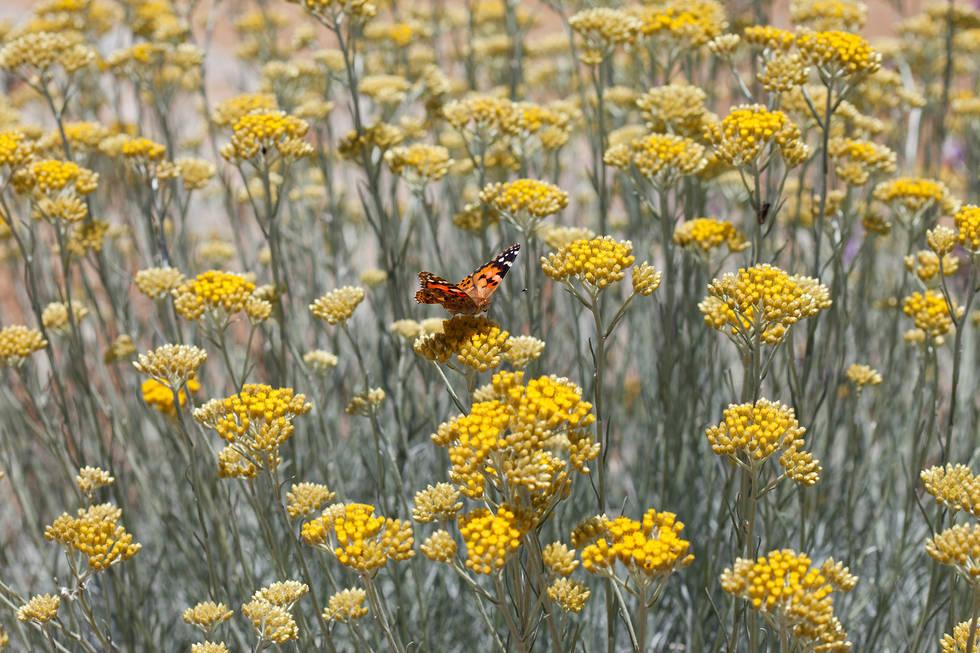 Butterfly, Greece