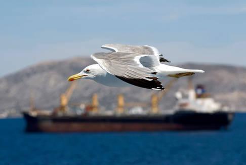 Seagull, Saronic gulf, Greece