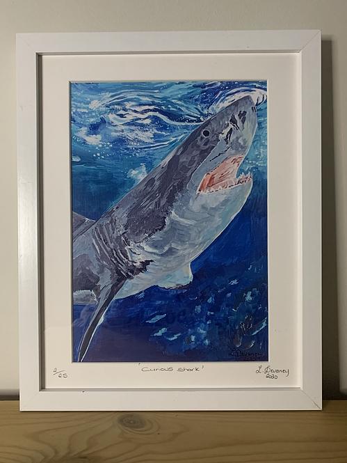 'Curious Shark' High Quality print on canvas paper