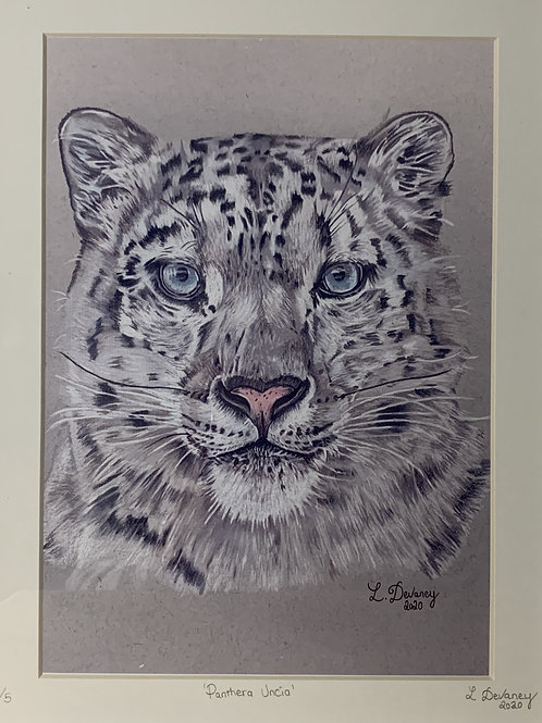 'Panthera Uncia' High Quality print on canvas paper