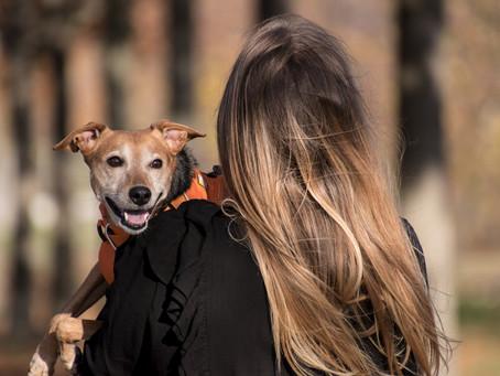 Sarcoma de Tecidos Moles em Cães e Gatos