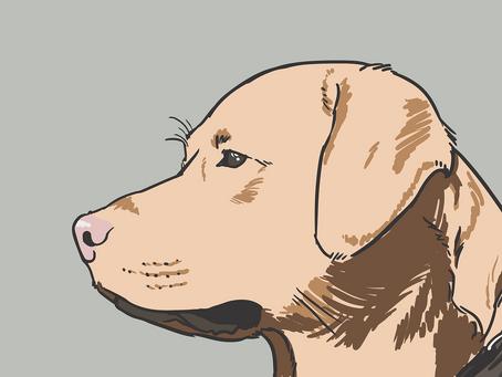 Luxação Medial de Patela em Cães