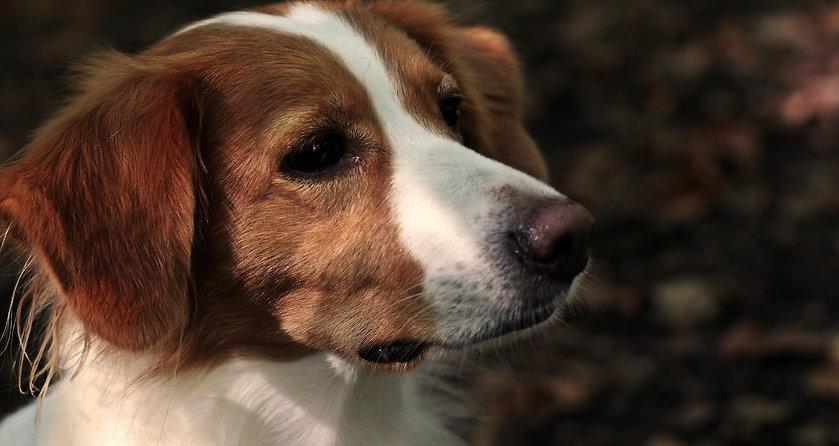 dog-3739225.jpg