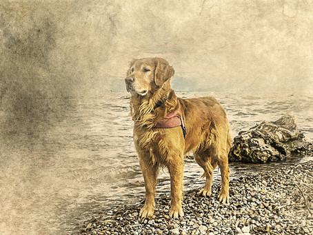 Distrofia Muscular em Cães