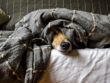 Avulsão da Tuberosidade da Tíbia em Cães: Etiologia, Diagnóstico e Tratamento
