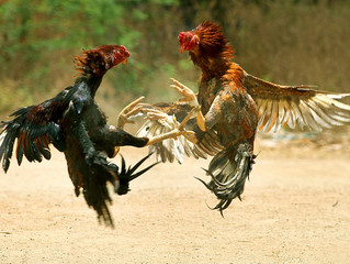 Familienpolitik: Hahnenkämpfe schaden der Sache! - Das Wort den Parteien