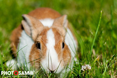 20150704-Rabbit-42.jpg