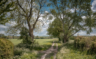 The Driftway, West Hagbourne