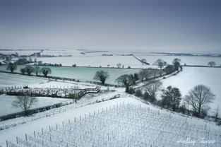 The Vineyard at Coscote near West Hagbourne