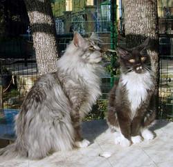 Héllioth & Ivan