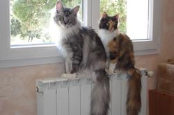 Elioth & Ethel