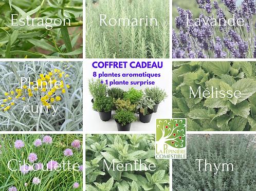 Coffret 8 aromatiques + 1 plante surprise