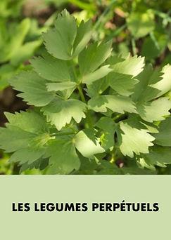 Les_légumes_perpetuels.001.jpeg